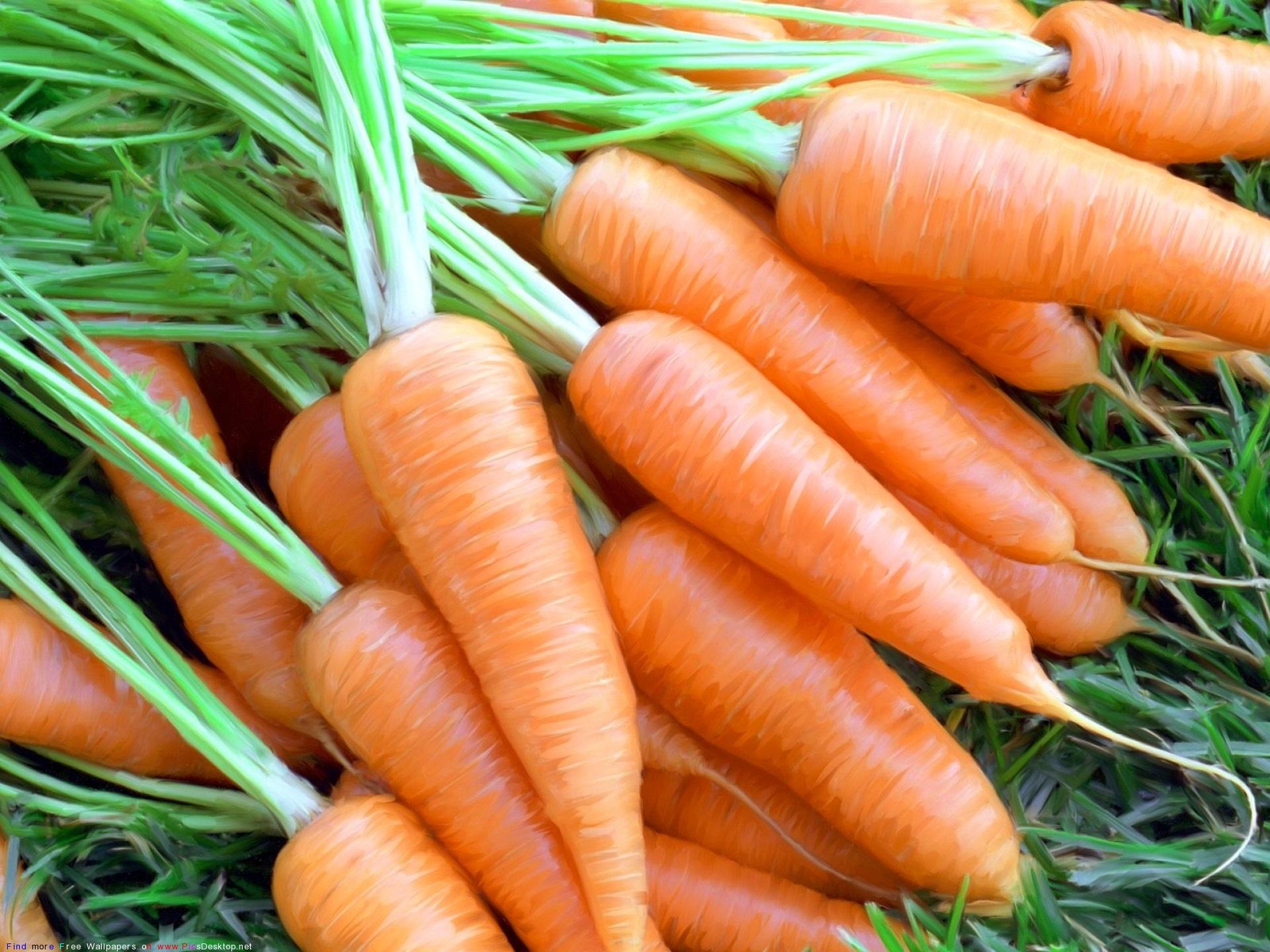Чем болеет морковь, симптомы и лечение